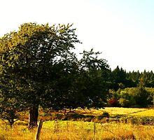 Golden Tree by gavinimes