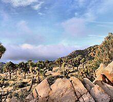 Joshua Tree Field of Cactus by Rosalee Lustig