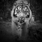 On The Prowl by Leanne Allen