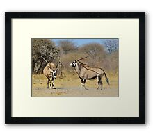 Oryx - Pride, Power and Anger Framed Print
