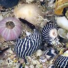 She Sells Sea Shells by the Sea Shore by Marilyn Harris