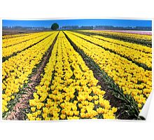 Yellow Tulips for Easter Poster