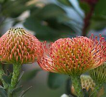 exotic flower by spetenfia