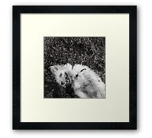 Dogs with game face on .22 Framed Print