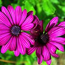 Pretty in Purple by WeeZie