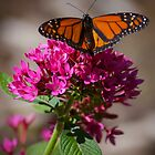 Butterfly in the garden by Dennis Reagan