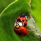 The Love Bugs by vigor