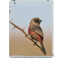 Blackcheeked Waxbill - Finding Thorny Solitude iPad Case/Skin