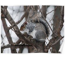 Squirel in a Tree Poster