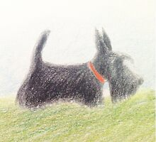 Scottie – pencil sketch by BonniePortraits