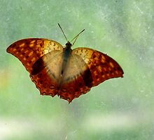 See Through Butterfly on Frosty Glass by artbybutterfly
