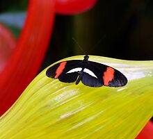 Butterfly Resting on Yellow Glass by artbybutterfly