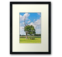 Cows in the Shade Framed Print
