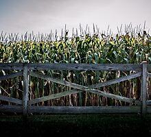 Corn by Jay-J