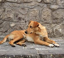 Brown Dog on a Stone Step by rhamm