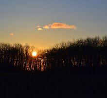 Sunset Trees 2 by Mark Hudon