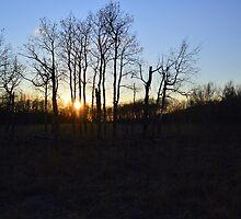 Aspen Prairie Sunset by Mark Hudon