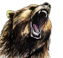 Grizzly Bear  by lusha