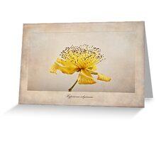Hypericum calycinum Greeting Card