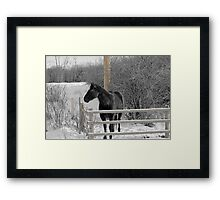 Cold But Hardy Framed Print