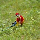 Birdie Lollipop Time by byronbackyard