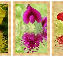 All three Reflections by Paul Williamson