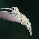 Ruby Throated hummingbird by Dennis Cheeseman