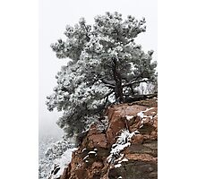 Snowy tree on red rock Photographic Print