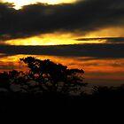 Early Morning on Hayne Down by lezvee