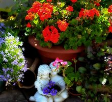A small corner of the garden by missmoneypenny