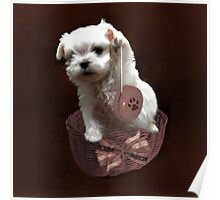 MALTESE PUPPY-JUST PLAYIN WITH MY YO-YO - I WONDER IS ANYBODY WATCHING LOL /PILLOW / TOTE BAG Poster
