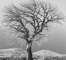Winter Tree B&W by Winona Sharp
