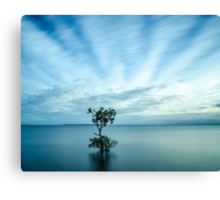 Mangrove Tree at Wellington Point Canvas Print