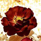 Deep Rose by Winona Sharp