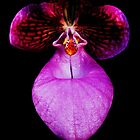 Pucker Up Baby! - Orchid Alien Discovery by ©Ashley Edmonds Cooke