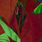 Canna Abstract by Winona Sharp