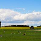 lismore, victoria, australia by gary roberts