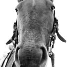 ... long face by Danielle Espin