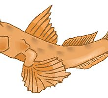 Goby Fish by kwg2200