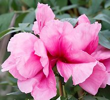 peony in spring by spetenfia