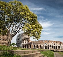 Colosseo from Venus temple by tardigrada