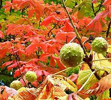 Autumn Approaching by Fara