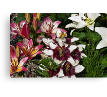Lily Variety Canvas Print