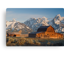 Bison at barn Canvas Print
