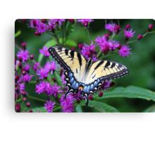 Tiger Swallowtail - Hueston Woods Ohio Canvas Print