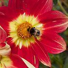 Flowers by rachelstone
