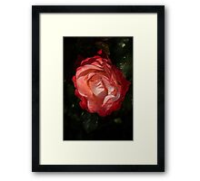 A Wonderful Cream-and-Red Rose With Dewdrops Framed Print