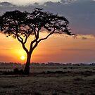 Serengeti Sunset by phil decocco