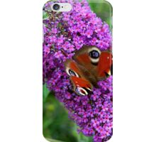 Peacock Butterfly on Buddleia iPhone Case/Skin