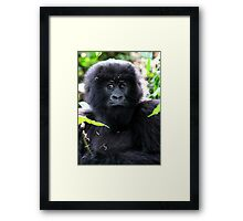 """What are you going to do to me?"" Juvenile Mountain Gorilla Framed Print"